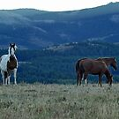 Evening on the Rocky Mountain Front by Donna Ridgway