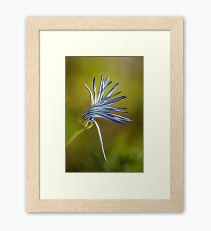 Dancing Daisy Flower Framed Print
