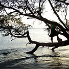 Tree over the Water by CSDesigns