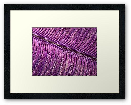 Purple Quill by Krys Bailey