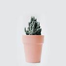 Cactus love III by Ingrid Beddoes