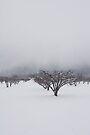 Winter White by photosbyflood