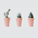 Kaktusliebe IV von Ingrid Beddoes