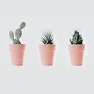 Cactus love IV by Ingrid Beddoes