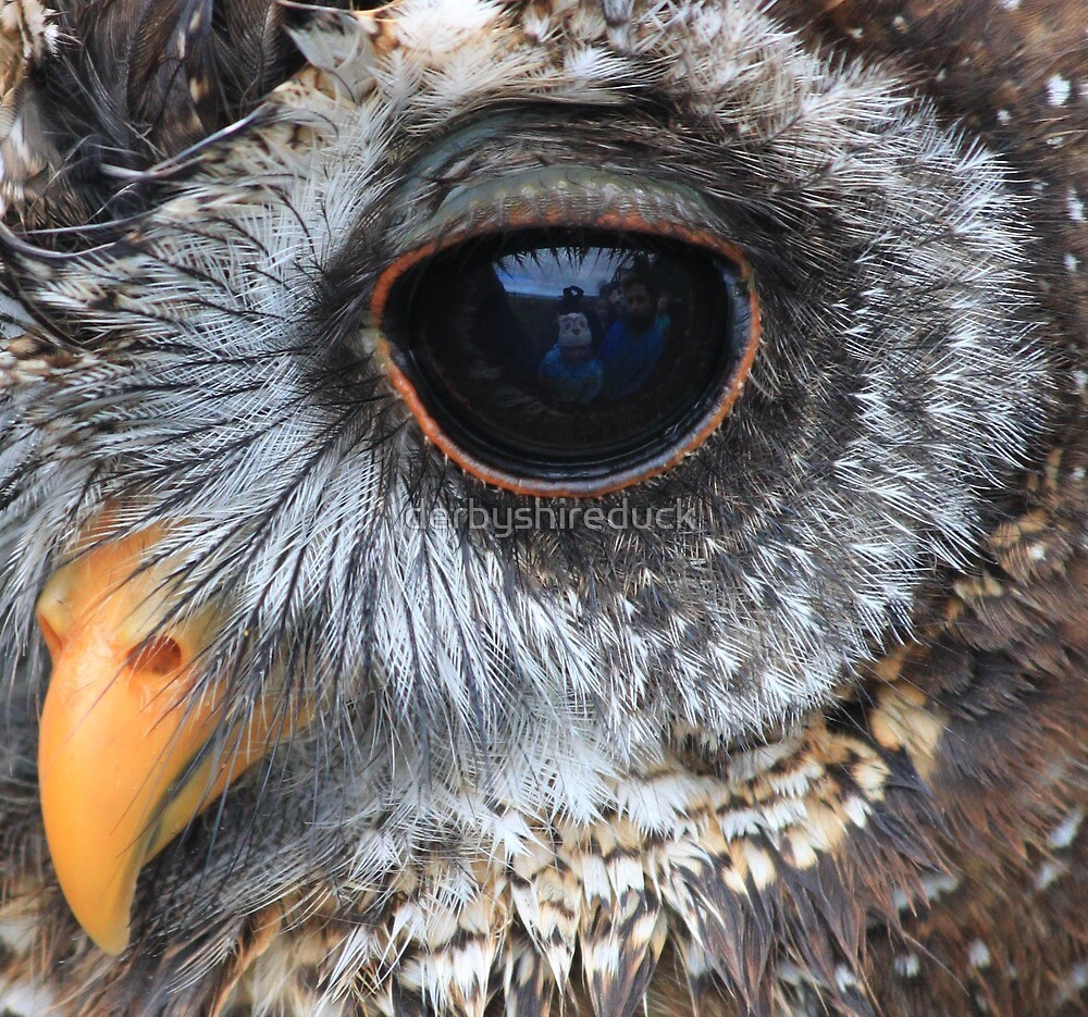 Woodford Owl close up by derbyshireduck