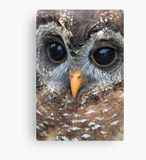 woodford Owl Canvas Print