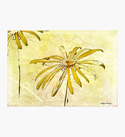 DANCING DAISIES Photographic Print