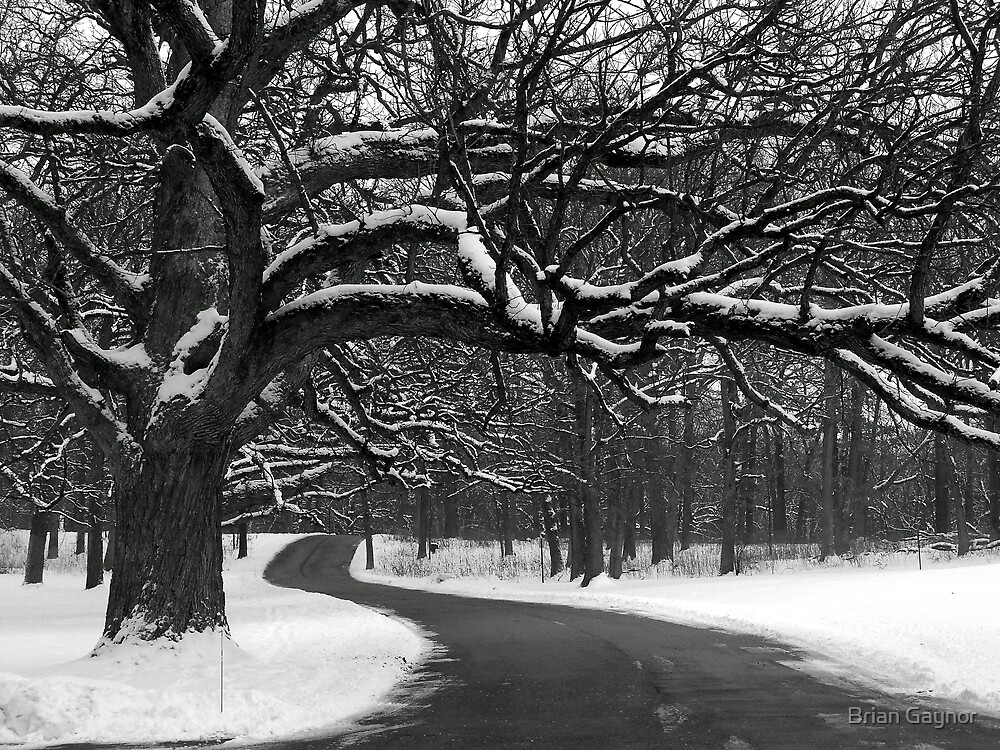 Winding Path by Brian Gaynor