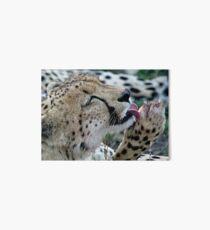 Grooming Cheetah Art Board