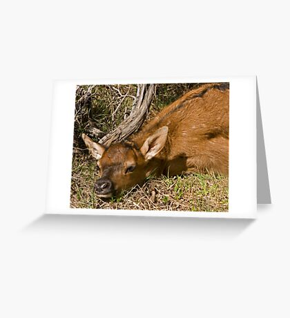 Elk Fawn Hiding in Sage Greeting Card