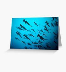 Hammerhaie Grußkarte