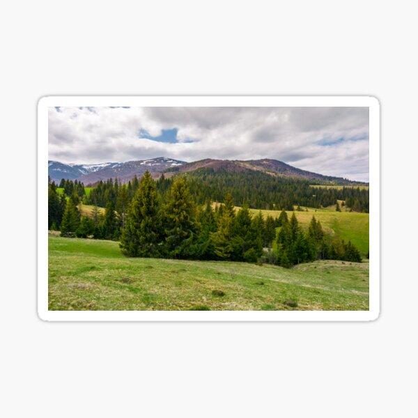 spruce trees on grassy hills in Carpathians Sticker