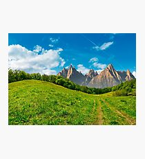 forest on grassy hillside in tatras Photographic Print