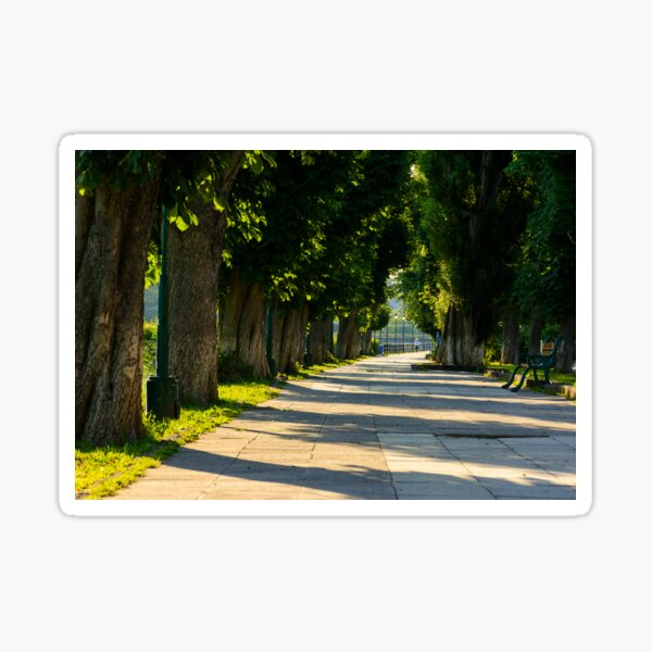 chestnut alley with benches in summertime Sticker