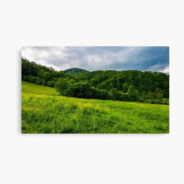 grassy pasture near the forest in stormy weather Canvas Print