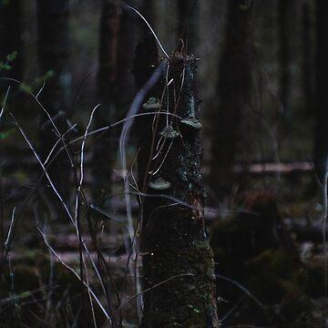 Stump by MsDunwich
