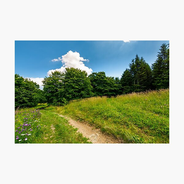 footpath trough the glade in forest Photographic Print