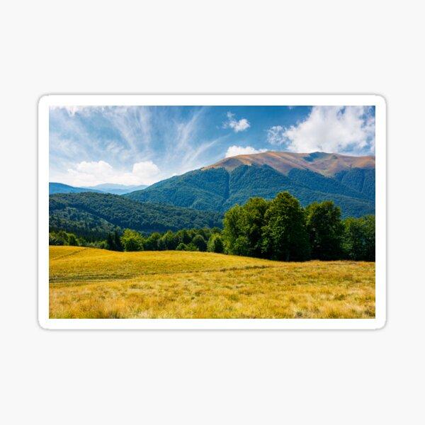 beech forest at the foot of Apetska mountain Sticker