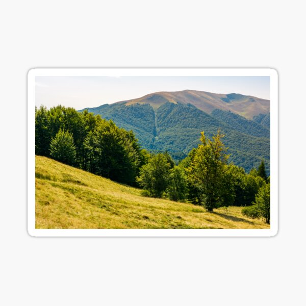 forested hills of Carpathian mountains in summer Sticker
