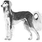 Saluki by doggyshop