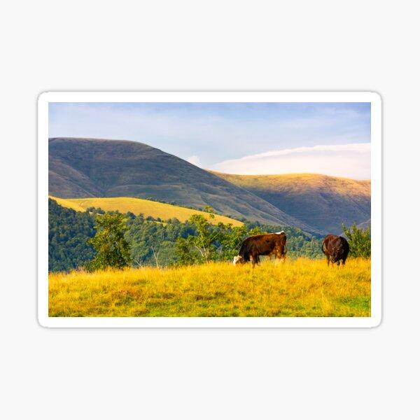 cows grazing near beech forest in mountains Sticker