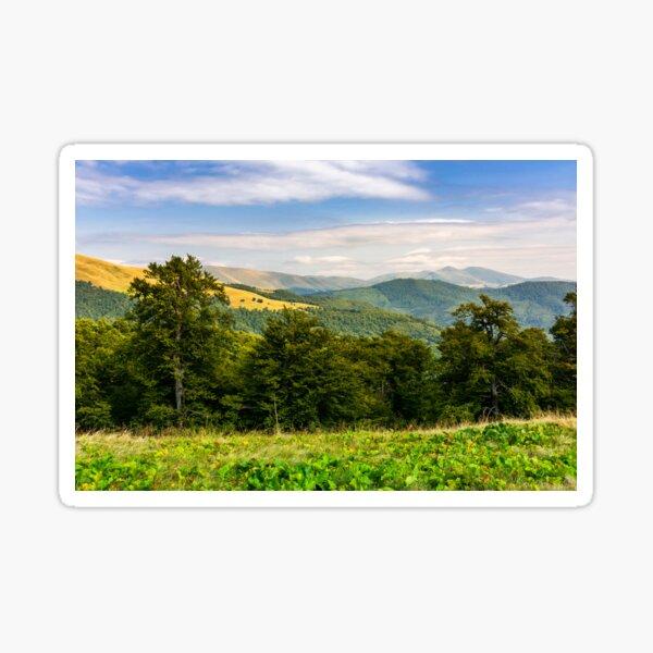 beech forest of the Svydovets mountain ridge Sticker