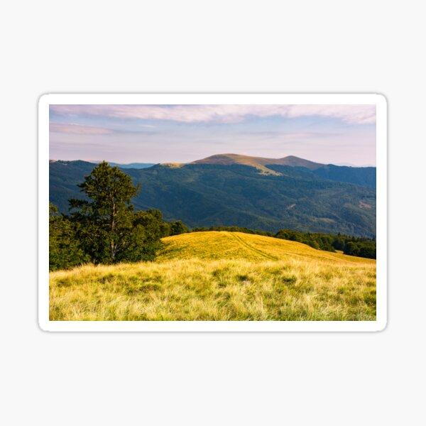 beech tree on grassy hillside in evening Sticker