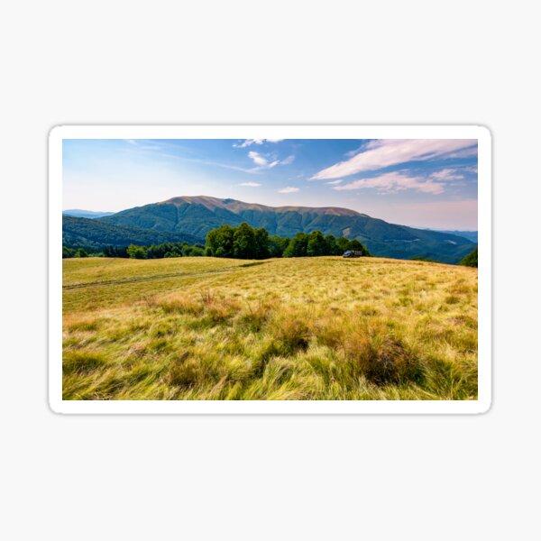 large grassy meadow of Carpathians Sticker