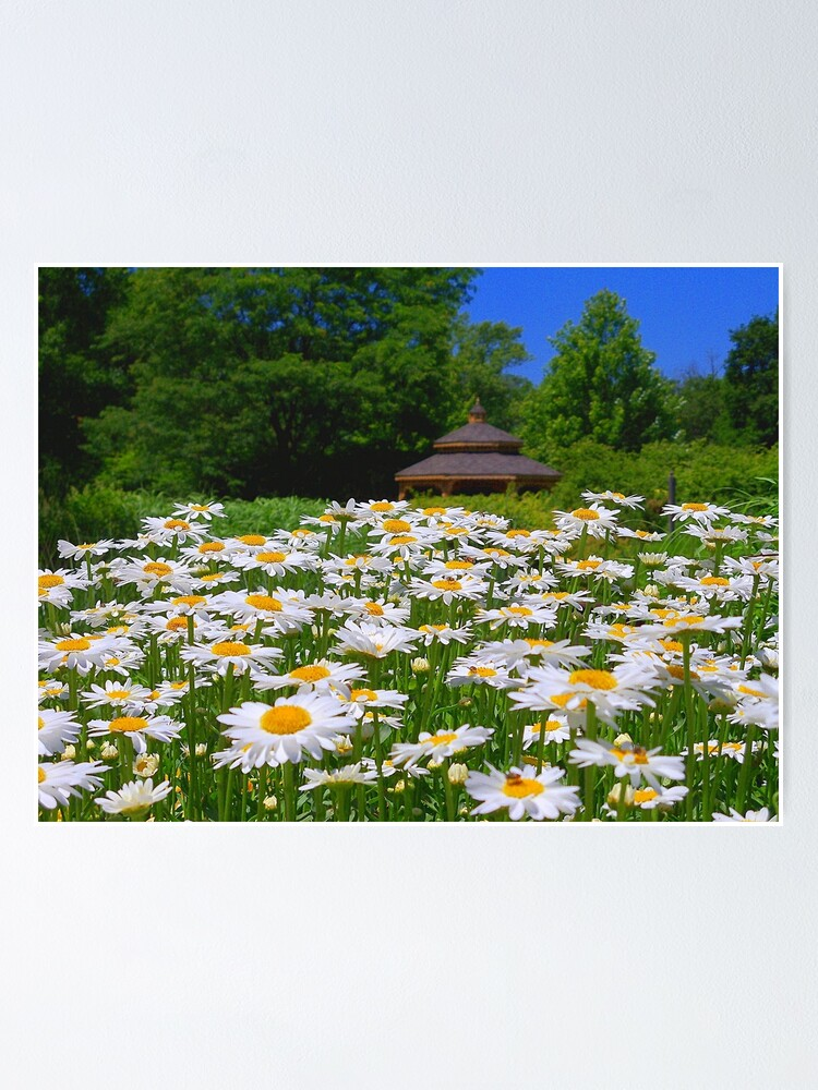 Alternate view of Pushing Up Daisies Poster