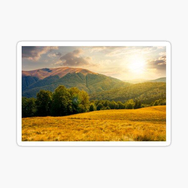 beech forest near Apetska mountain at sunset Sticker