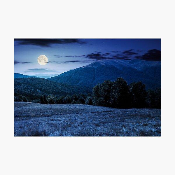 beech forest near Apetska mountain at night Photographic Print
