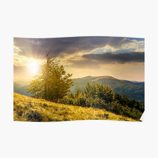 tree on the grassy hillside on at sunset Poster