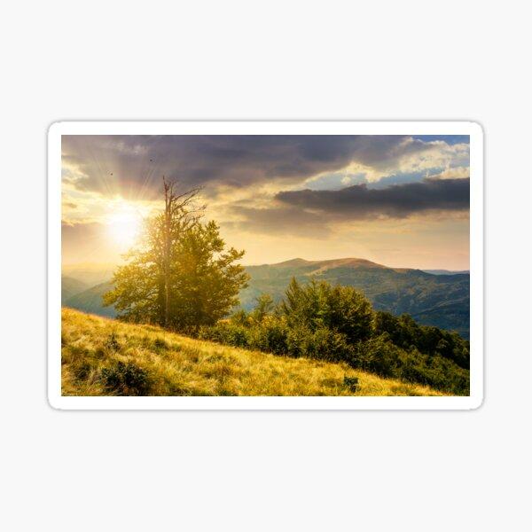tree on the grassy hillside on at sunset Sticker