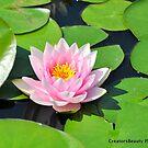 Water Lilly by CreatorsBeauty