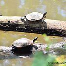 Turtle Twins by CreatorsBeauty