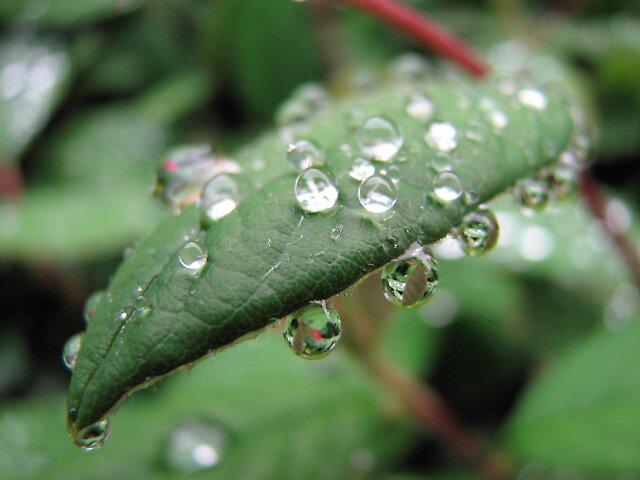 rain-drop by tabusoro