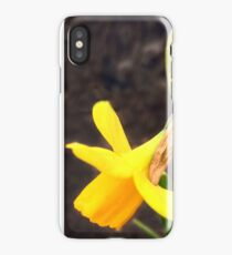 Daffodils in spring iPhone Case