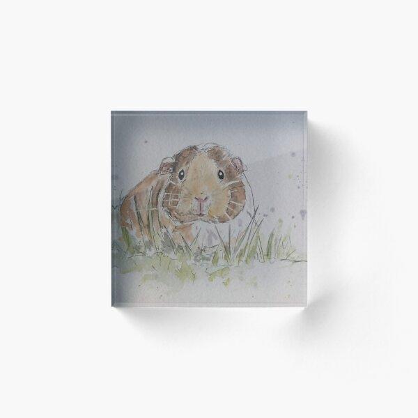 Guinea pig illustration  Acrylic Block