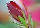 Pastel Leucadendron by Renee Hubbard Fine Art Photography