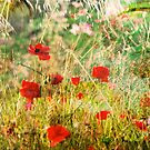 Poppies on Que by linaji