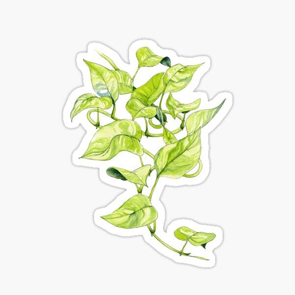 Devils Ivy Illustration Sticker