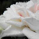 Queen in the rain by bogna777