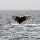 Whale Tail by Lee Anne French