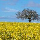 Tree by Anita Harris