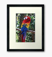 Pretty Parrot  Framed Print