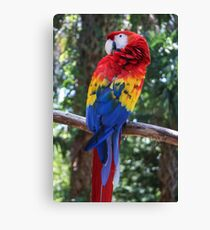 Pretty Parrot  Canvas Print