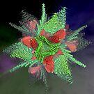 Cactusflower by Ineke-2010