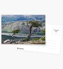 Trees in the Wind Postcards