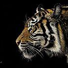 Tiger, Tiger by bellestone