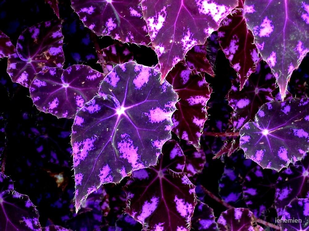Mysterious Patterns in Purple by ienemien